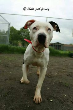 Lily #adoptable at #CACC adoptable pets on Facebook in #Chicago
