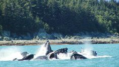 SHORE TRIPS RECOMMENDED FOR EXCURSIONS  /excursion-image/juneau-alaska/combo-tour-whale-watching-and-mendenhall-glacier/063353_110902093629.jpg