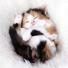 Cute kittens: The latest and cutest kitty videos are here for you. Cute kittens: The latest and cutest kitty videos are here for you. Cute Cats And Kittens, I Love Cats, Crazy Cats, Adorable Kittens, Kittens Playing, Ragdoll Kittens, Tabby Cats, Cute Fluffy Kittens, Super Cute Kittens