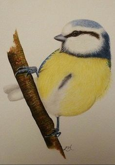 Fine detail watercolour painting of a Blue Tit by ELH Artistry