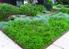 Eco-Friendly Landscaping: Replace Your Lawn