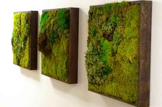 Moss Walls: The Newest Trend In Biophilic Interiors Inhabitat - Sustainable Design Innovation, Eco Architecture, Green Building