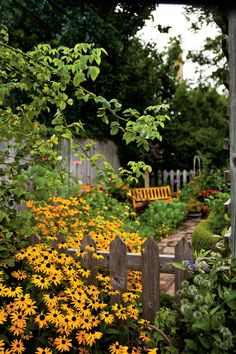 Easy-Growing Flowers for Fences: Black-eyed Susans