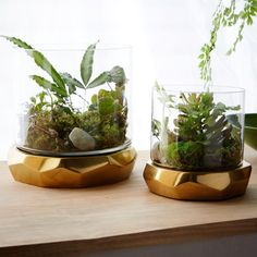 Creative firm Roar + Rabbit designs textiles, furniture and home accessories that blend modern style with whimsical details. With their soil-friendly, antiqued brass-finished bases, our Freeform Terrariums' open glass cases make displaying your greens easy and beautiful at the same time.