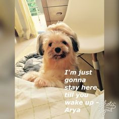 My Children, Wake Up, Photo S, Dogs, Animals, My Boys, Animales, Animaux, Pet Dogs