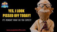 The Beauty of Mondays! #Monday #monday #Mondays #mondaymotivation #Mondaymemes #funnymemes #meme #joke #oneliner #puppet #funnypuppets http://ift.tt/2mGYExL