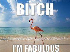 Because flamingos are pretty damn fabulous.