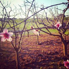 #primavera #flordurazno #durazno #rosado #florecer #photobyMAC #fotogtafía #photography #arboles #frutal #frutasenflor