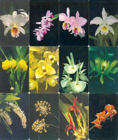 12 Phonecard / Tarjeta Telefonicas Venezuela Cantv  Orquídeas de Venezuela