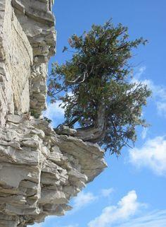 Bruce Peninsula trees - Google Search
