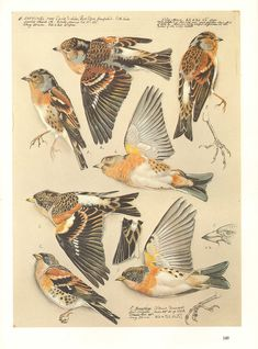 This really does them justice. Art And Illustration, Antique Illustration, Vintage Birds, Vintage Art, Vintage Ideas, Bird Drawings, Animal Drawings, Funny Bird, Steampunk Animals