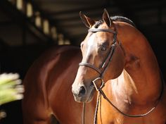 Allocate Your Assets....AQHA Stallion. Nothing more beautiful than a hunt seat stallion.
