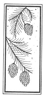 christmas pine cone quilting motif - Yahoo Search Results