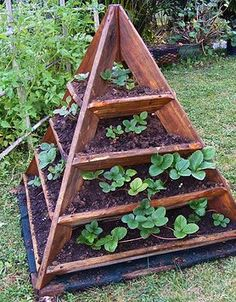 The pyramid strawberry patch!