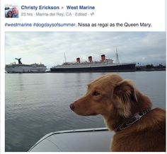 #‎westmarine‬ ‪#‎dogdaysofsummer‬. Nissa as regal as the Queen Mary.