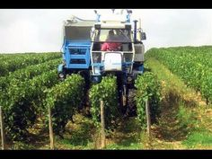 Grape Harvester Machine | Modern Agriculture Technology