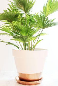 Mon DIY: Customiser ses pots de fleurs afin de donner un joli look à vos plantes avec peu de moyen.