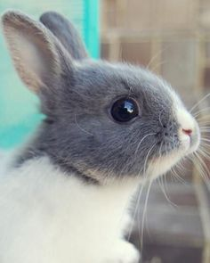 Who wants this bunny?  How would you name him?