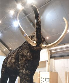 Woolly Mammoth @ Hull and East Riding Museum open Sundays 1.30pm til 4pm
