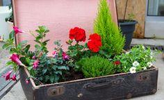 Urlaubszeit: Tipps für Ihre Pflanzen -  Wer in den Ferien verreist, sollte frühzeitig Vorsorge für seine Topf- und Kübelpflanzen treffen. Wir haben die wichtigsten Tipps für Sie zusammengestellt.