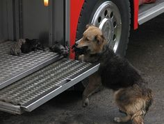 THIS JUST IN: Momma Rescutes Pups from Fire!