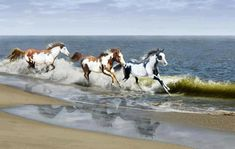Beautiful colorful pictures and Gifs: Beautiful Animales pictures
