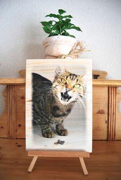 Katze / Foto auf Holz von DaiSign auf DaWanda.com