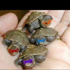 Real-life mutant ninja turtles!