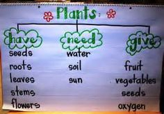 Plants Anchor Chart 1