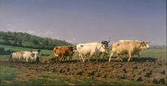 Charolaise — Wikipédia