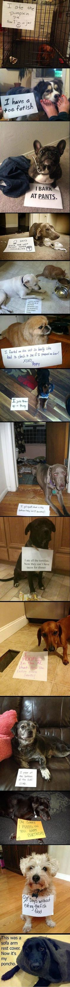 best of dog shaming at wit humor