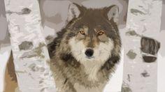 Photoshop, Wolf Photograph (http://hdw.datawallpaper.com/animals/wolf-307807.jpg)