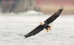 A Post By: Prathap DK  What is the most important factor in getting your bird photographs noticed by a large audience? Is it the camera or the lens or the bird? Imagine you have a Canon 1DX or Nikon D4 and 800mm lens. You have been to a place to photograph the magnificent Bald Eagles. Everything...
