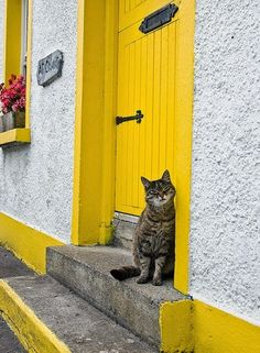 Cat from Galway Bay, England