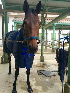 La fleur, dalle 15:00 al 2 dicembre 2015 mercoledì per il corso II con istruttrice Hara ed un altro cavallo; Ramses.