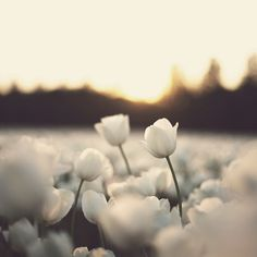 white flowers, they are my favorite.. any white flower really but i do have a few favs