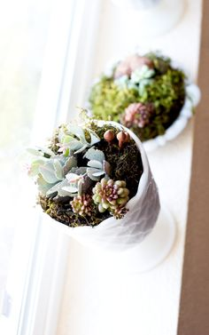A d.i.y for the not so great gardener! Succulents are easy to care for no green thumb necessary.