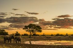 Etosha National Park - Sunset by the waterhole with two elephants. Another beautiful day in Etosha National Park, Namibia.