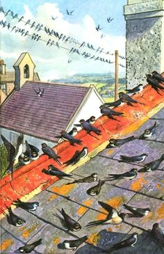 Swallows on roof