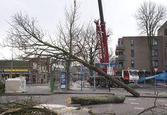 Gemeente Emmen: Wilhelminastraat