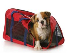 Dog Travel Bags: How to Choose the Right One - Top Dog Tips