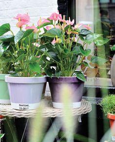 Pot plants by Serax for Pantone Universe