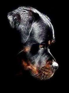 #dog# #animals#