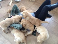 Bad day cure : smother self in puppies