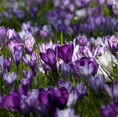 Shades of Purple and Lilac by flash of light on Flickr.