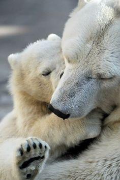 Ursos Brancos