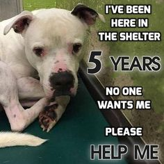 Five years in a shelter - the dog that nobody wants needs to be loved