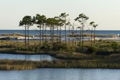 State Parks & Forests in South Walton, Florida | SoWal.com - Insider's Guide for South Walton Beaches & Scenic 30A