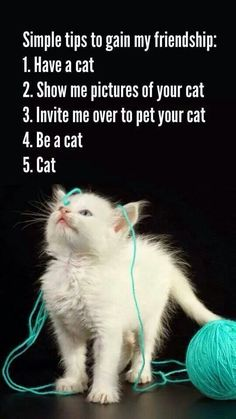 Simple Tips To Gain My Friendship: 1. Have a cat, 2. Show me pictures of your cat, 3. Invite me over to pet your cat, 4. Be a cat. 5. Cat