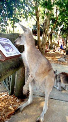 Kkk parece que este canguru adora ler....rsrs